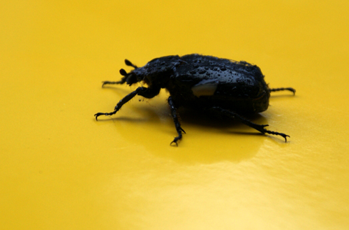 Symbolic Meaning of Beetles
