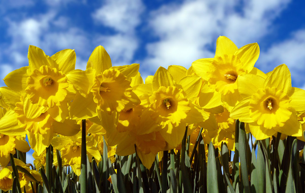 Today's holiday is St. David's day in Wales