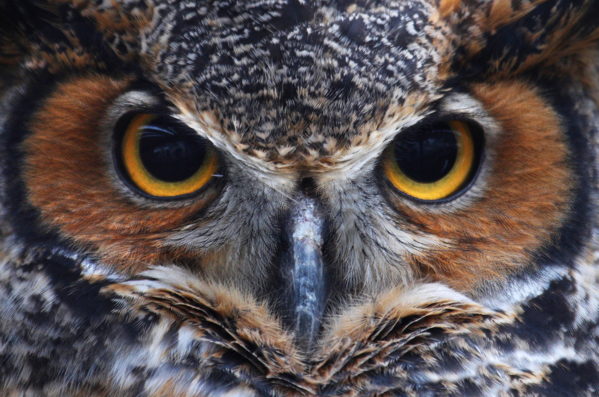 Wising Up To Owl Totem Talk Symbolic Meanings Symbolic Meanings