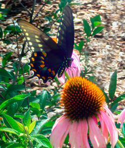 Symbolic Butterfly Meaning in Dreams