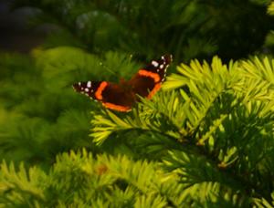Moth Meaning - Moth Symbolism