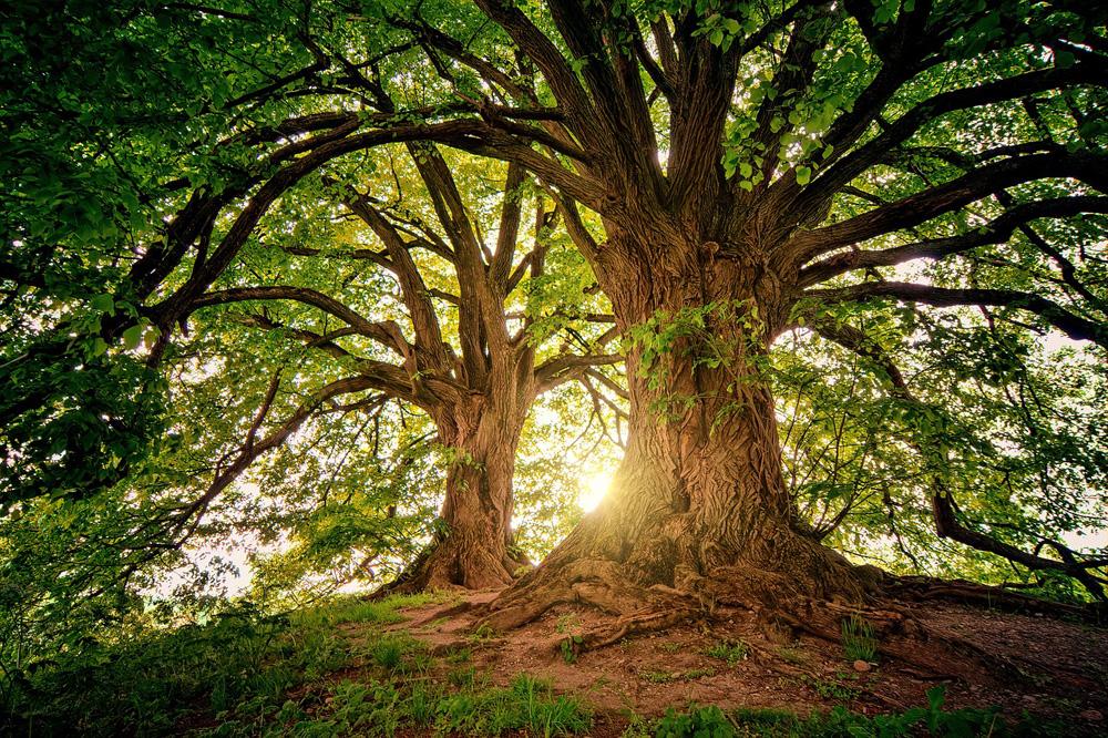 Tree wisdom tree worship