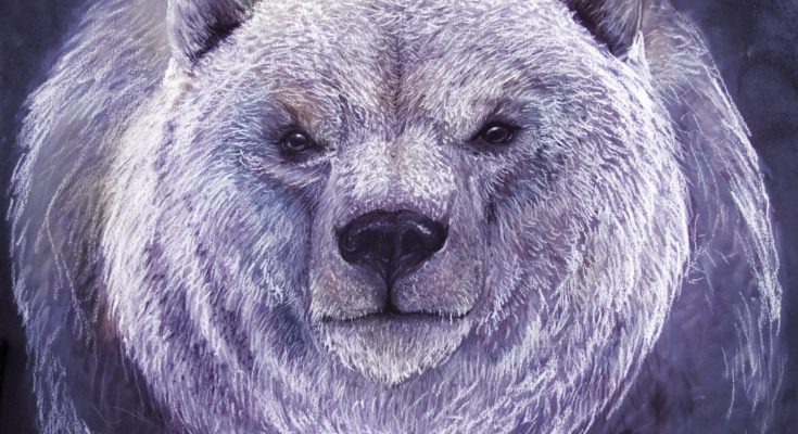 bear totem messages
