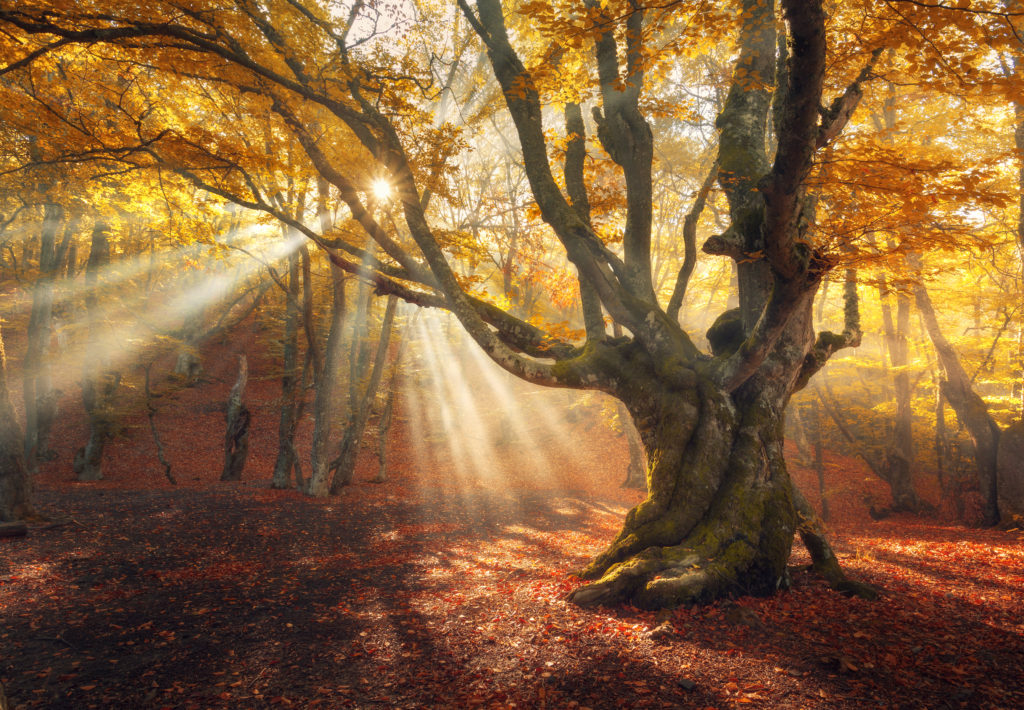 Autumn Meaning Mabon Meaningq