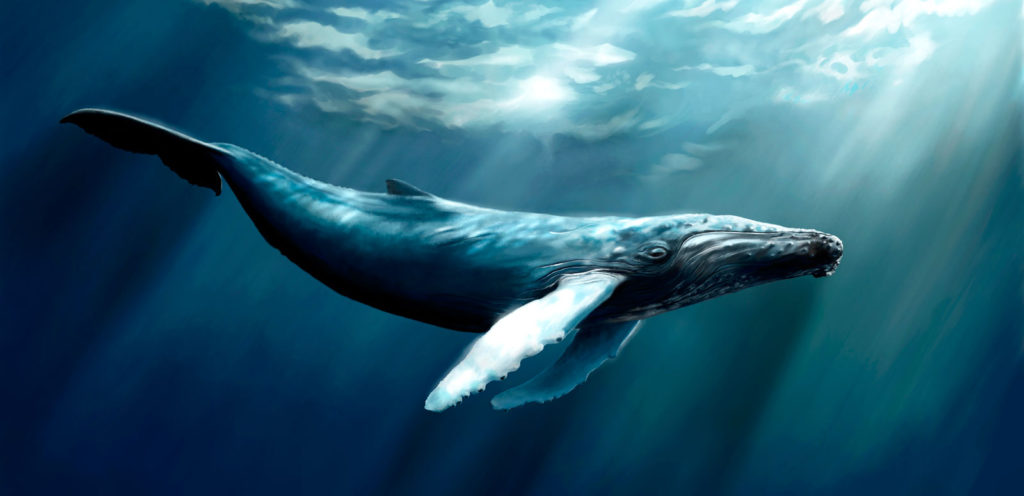 Whale Totem Meanings